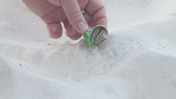 Thumbnail for The Man Took His Fingers a Small Hermit Crab