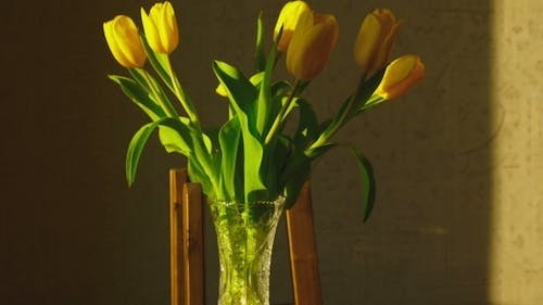 Withering Yellow Tulips