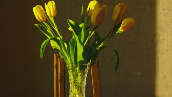 Thumbnail for Withering Yellow Tulips