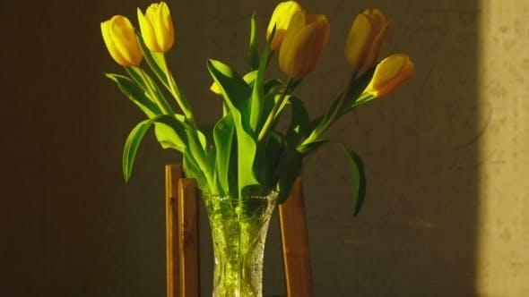 Thumbnail for Tulipes jaunes flétrissant