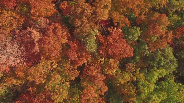 Thumbnail for Aerial Above Autumn Fall Tree Tops