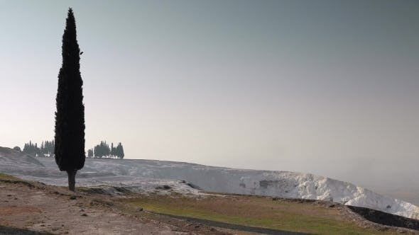Thumbnail for A Lonely Cypress With a White Travertines In a Distance, Pamukkale, Turkey.