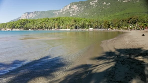 Thumbnail for Sandy Beach With Lush Green Nature Of Pine Trees And Palms Along