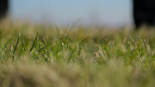 Thumbnail for Man Sets a Golf Ball On a Lawn