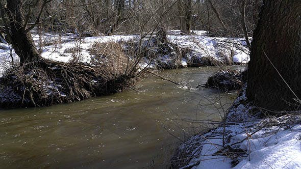 Thumbnail for Forest River at Early Spring
