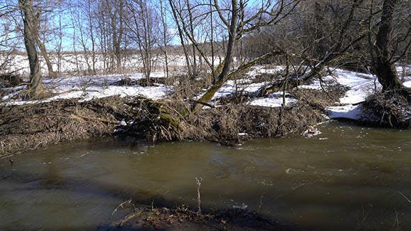 Forest River at Early Spring