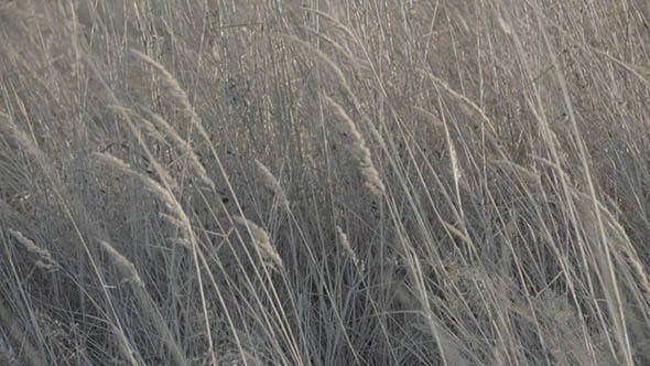Cover Image for Moving Dry Grass in Field