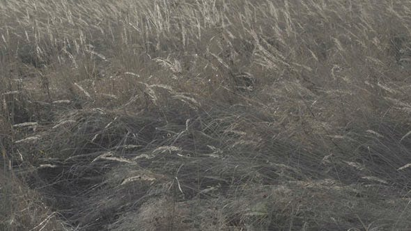 Thumbnail for Moving Dry Grass in Field