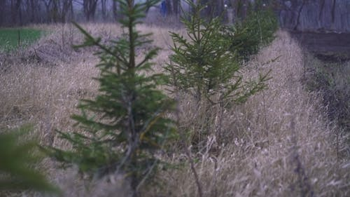 Christmas Trees That Grow In Line