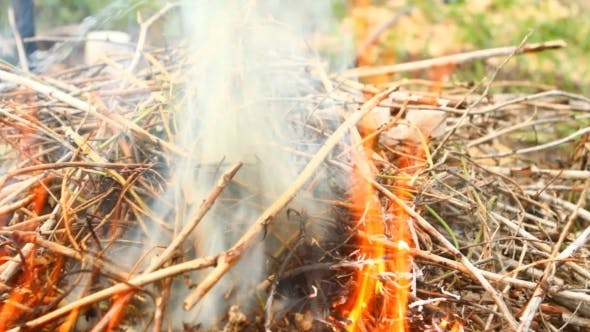 Thumbnail for Dry Twigs on Fire