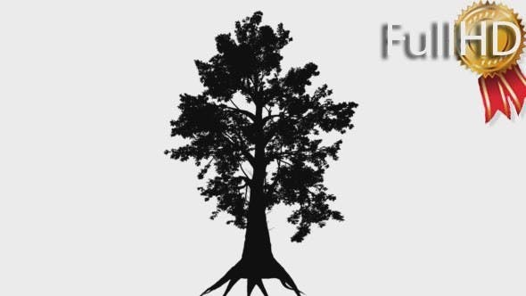 Thumbnail for Sassafras Lauraceae Family Silhouette of Animated