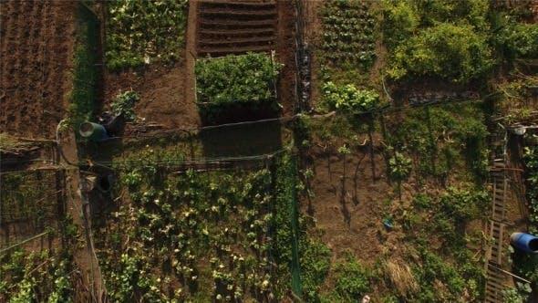 Thumbnail for Organic Vegetable Garden 3