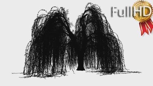Weeping Willow Salix Babylonica Ornamental Tree