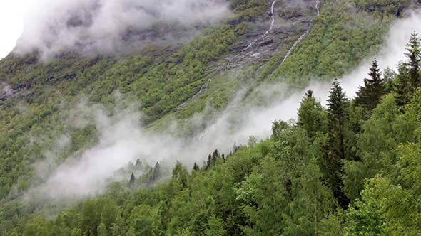 Cover Image for Mountain Forest Fog Norway