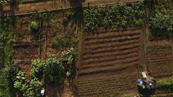 Thumbnail for Organic Vegetable Garden 4