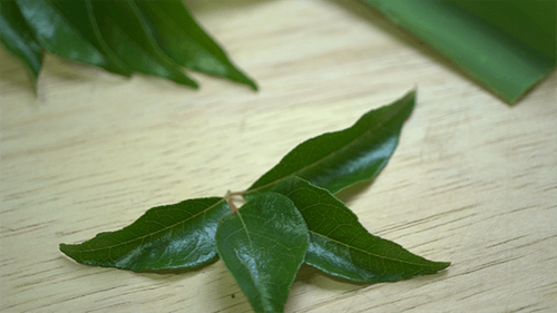 Spicy Curry Leaves for Cooking