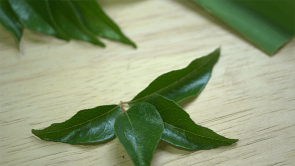 Thumbnail for Spicy Curry Leaves for Cooking