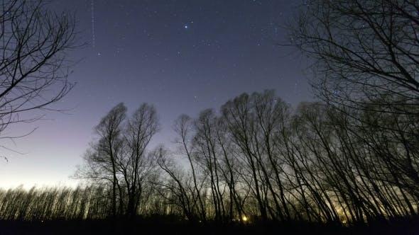 Thumbnail for Night Stars