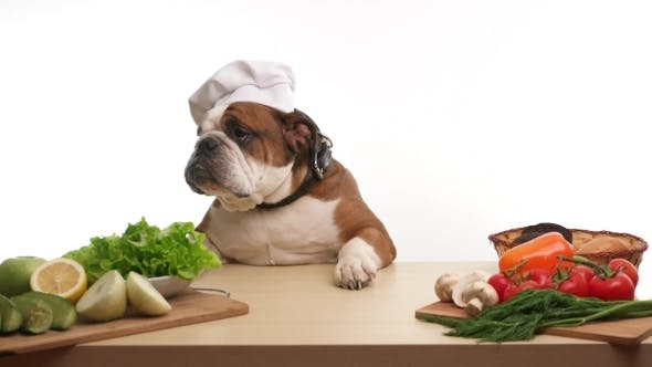 Thumbnail for English Bulldog As a Chef Standing At The Table