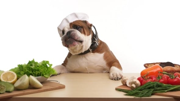 Thumbnail for English Bulldog As a Chef With Vegetables And Fruit