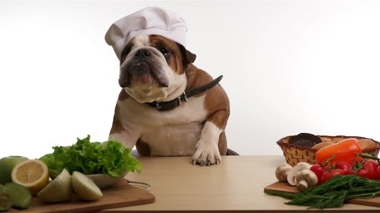 Thumbnail for English Bulldog As a Chef Preparing For Cooking