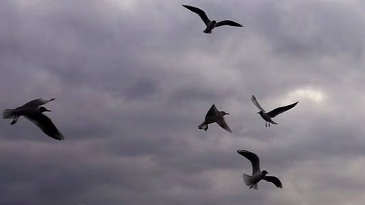 Thumbnail for Seagulls Flying In Sky Cloudy Day
