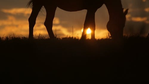 Beautiful Horse Is Grazing On Grass At Sunset