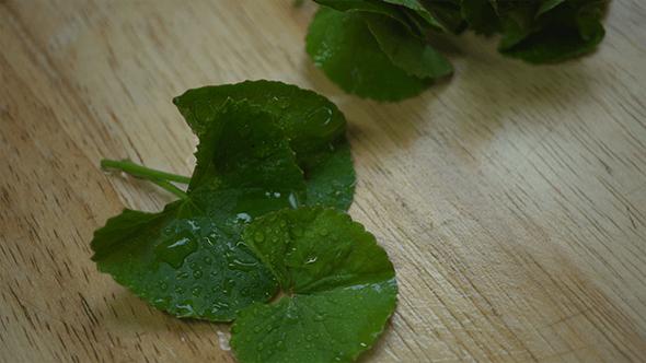 Thumbnail for Gotu Kola Spadeleaf Centella Leaves Herb