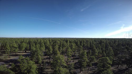 Above the Arizona Forest