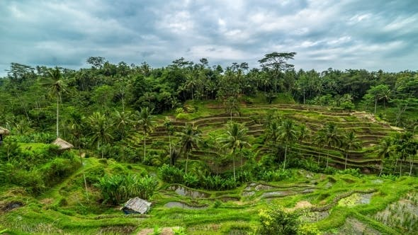 Thumbnail for Overcast Clouds Over Rice Terraces in Bali, Indonesia