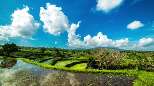 Cover Image for Reflection Of Clouds In The Water In The Rice Field in Bali