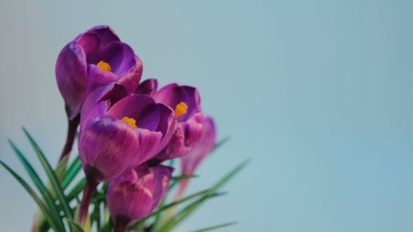 Thumbnail for Flowers Blooming
