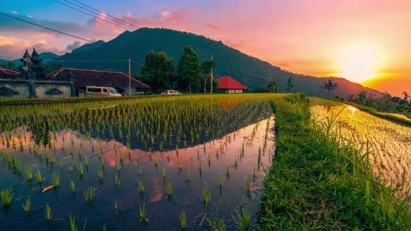Thumbnail for Sunset Over The Rice Field is Reflected In The Water in Bali