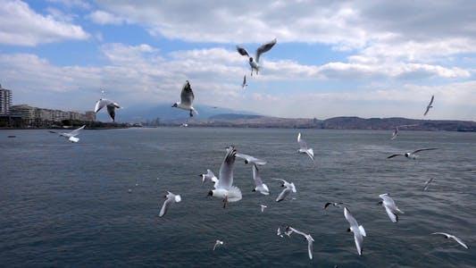 Thumbnail for Seagulls Flying 1