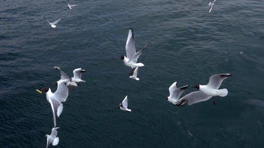 Thumbnail for Seagulls Flying 4