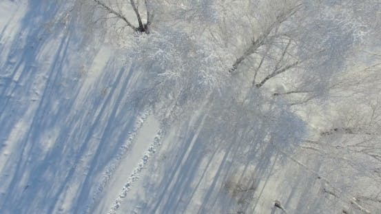 Thumbnail for Morning In a Winter Forest