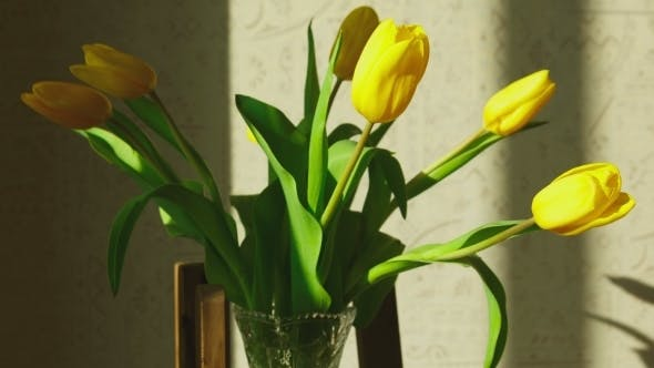 Thumbnail for Faded Yellow Tulip Buds Raised