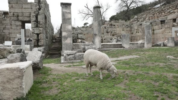 Thumbnail for Lamb of God Among the Ruins of Antique Temple