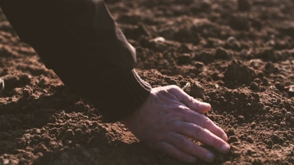 Thumbnail for Farmer Hands Holding And Pouring Back Organic Soil. Soil, Agriculture, Sunlight.