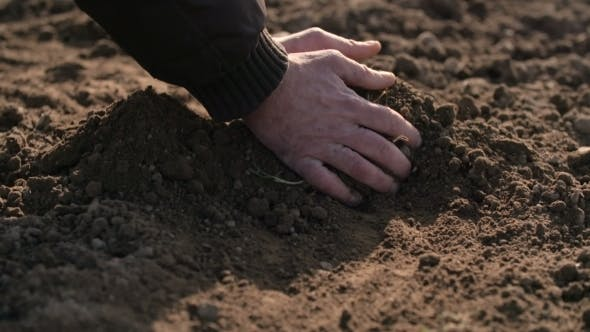 Thumbnail for Farmer Hands Holding And Pouring Back Organic Soil
