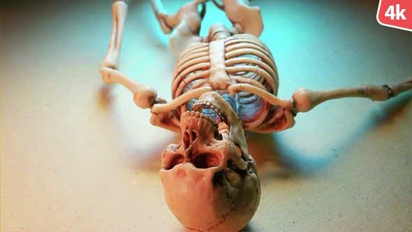 Human Skeleton 145