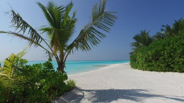 Thumbnail for Maldives Beach With Palm Trees 1