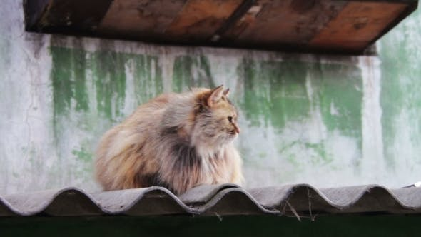 Cover Image for Homeless Cat On The Roof Outside