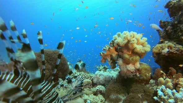 Thumbnail for Underwater Tropical Corals
