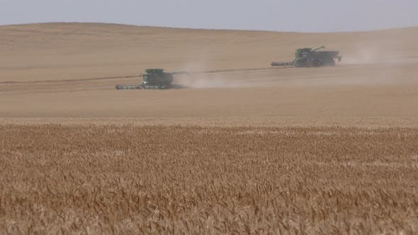 Thumbnail for Summer Harvesting Harvesters or Combines in Wheat Grain Field in South Dakota
