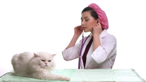 Thumbnail for Veterinarian Doctor And a White Cat