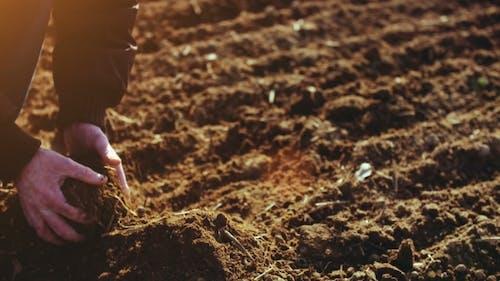 Farmer Examining Soil