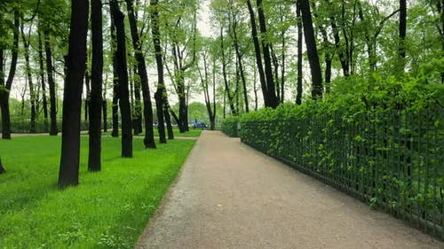 Walking Under Trees Along a Green Hedge