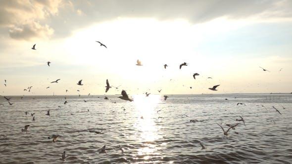 Thumbnail for Birds Flying