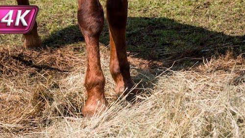 Horse Huf Beats